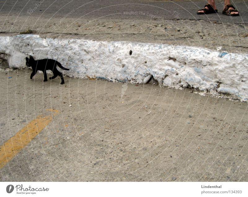 Black Cat Is Leaving klein schwarz Katze dünn laufen gehen Sandale Schuhe stehen Mann Blick Säugetier Katzenbaby rennen Fuß