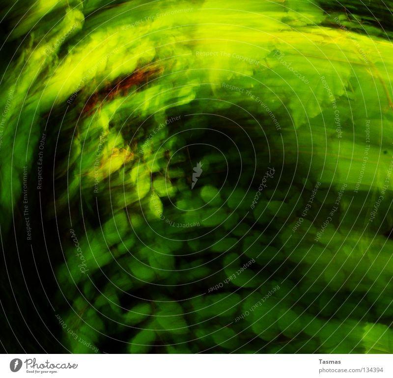 Green Flash grün Farbe Baum Blatt Wald Bewegung Frühling hell Geschwindigkeit Ausflug Rauschmittel Neonlicht grell blitzen