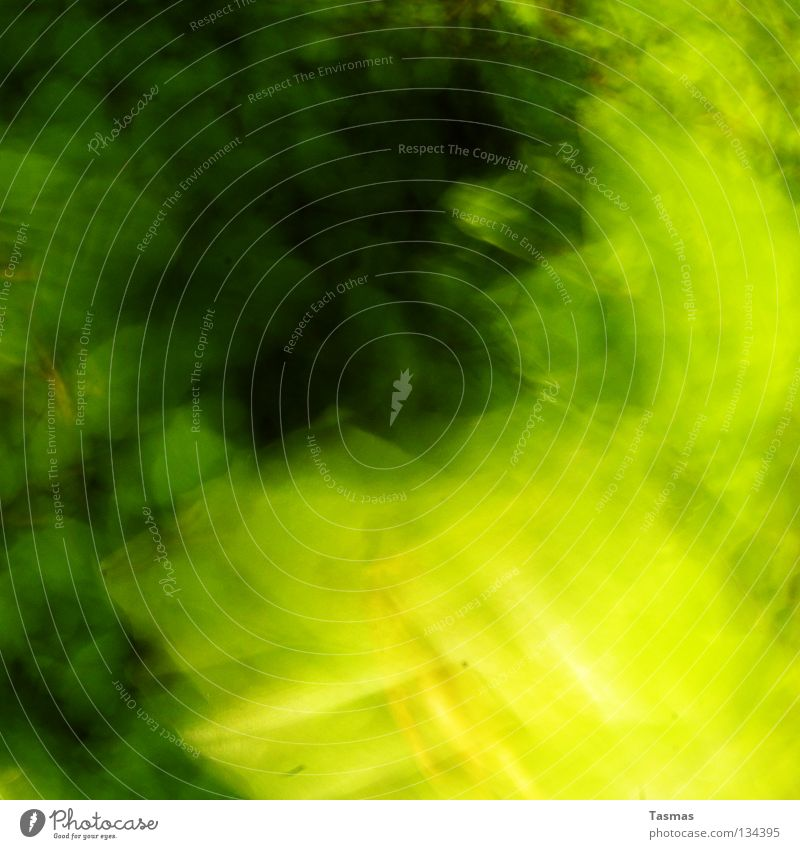 The Greener Flash grün Farbe Baum Blatt Wald Farbstoff Bewegung Frühling hell Geschwindigkeit Ausflug Rauschmittel Neonlicht grell blitzen