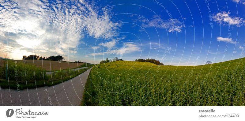 Road to heaven fahren Fußweg Feld Raps Schnellstraße grün Wolken Baum Bayern Hügel Dritte Welt Rohstoffe & Kraftstoffe Panorama (Aussicht) gefährlich Straße