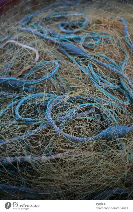 Lecker Bandsalat blau Wasser Meer gelb Ernährung Lebensmittel Küste See Wetter Arbeit & Erwerbstätigkeit Seil Fisch Schnur Netz Hafen Angeln