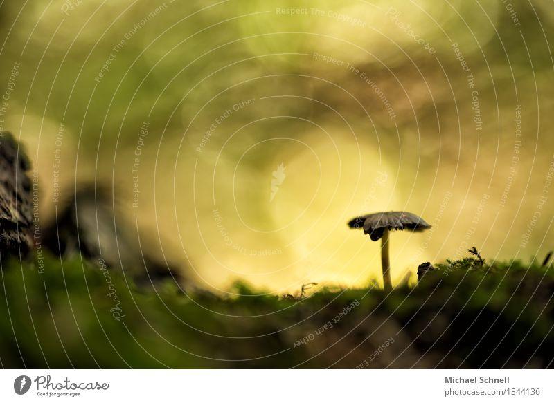 Einsamer Pilz Natur Sommer Einsamkeit Herbst Freiheit Horizont einfach einzigartig positiv Originalität friedlich