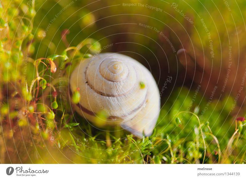 schön gebettet elegant Stil Umwelt Natur Erde Sommer Schönes Wetter Gras Moos Wildpflanze Wald Schneckenhaus Blühend Erholung glänzend genießen natürlich