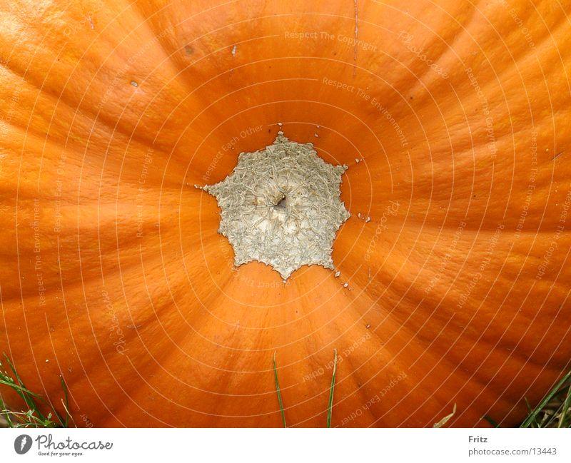 Kürbis Herbst orange Gesundheit