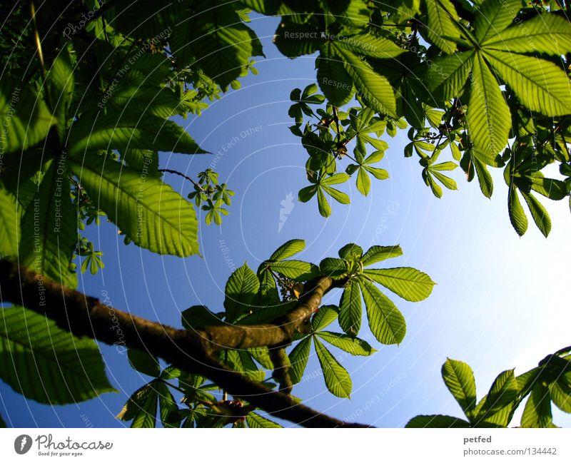 Exzessiver Frühling Blatt Sommer Baum grün Freizeit & Hobby Ferien & Urlaub & Reisen träumen intensiv schön himmlisch Physik Wald Himmel Sonne blau Freiheit
