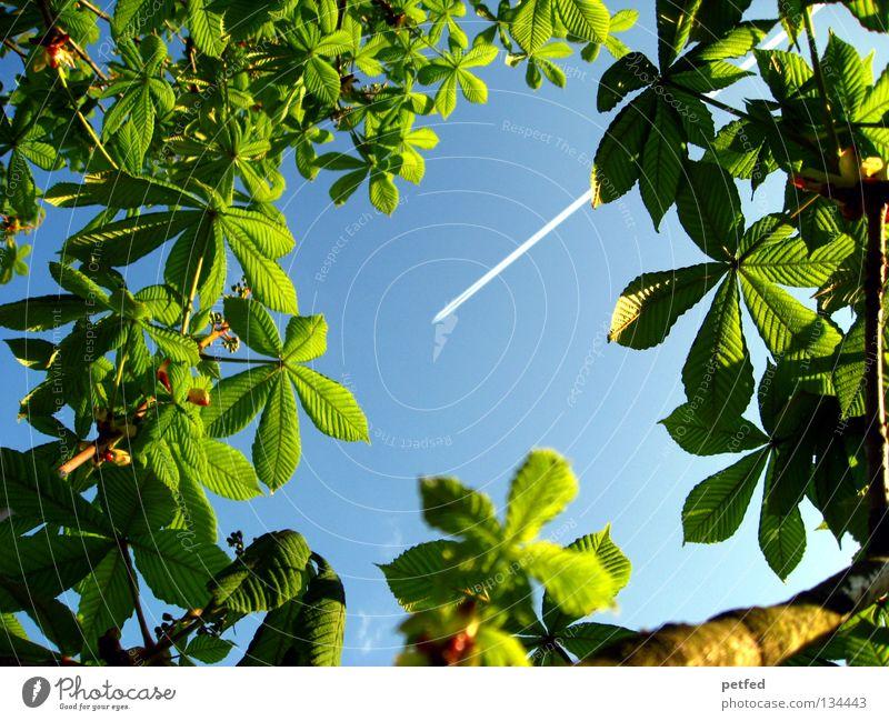 Exzessiver Frühling II Natur schön Himmel Baum grün blau Sommer Ferien & Urlaub & Reisen Blatt Wald Leben Frühling Freiheit träumen Wärme Flugzeug