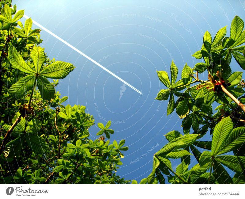 Exzessiver Frühling III Blatt Sommer Baum grün Freizeit & Hobby Ferien & Urlaub & Reisen träumen intensiv schön himmlisch Physik Wald Flugzeug Karibisches Meer