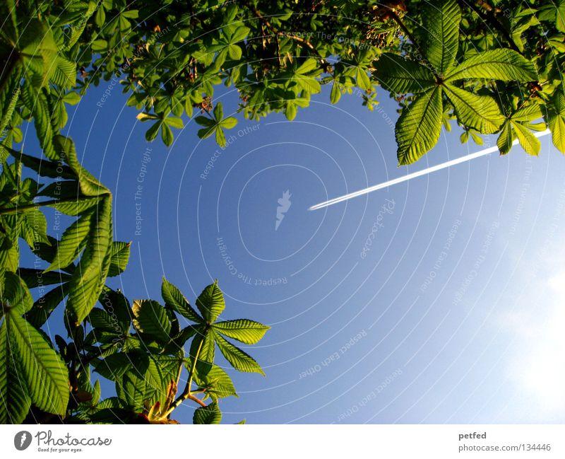 Exzessiver Frühling IV Blatt Sommer Baum grün Freizeit & Hobby Ferien & Urlaub & Reisen träumen intensiv schön himmlisch Physik Wald Flugzeug Karibisches Meer