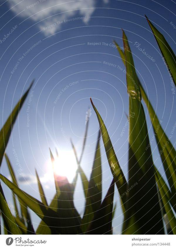 Picknick @ Cospudener See Himmel Sonne grün blau Sommer Wolken Erholung Gras Frühling Wärme Beleuchtung schlafen Energiewirtschaft genießen aufwärts