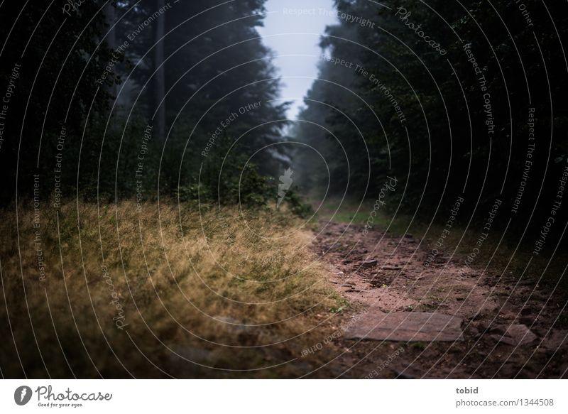 Wege Natur Landschaft Pflanze Sand Herbst schlechtes Wetter Nebel Baum Gras Sträucher Wald Wege & Pfade dunkel Einsamkeit Endzeitstimmung Farbfoto