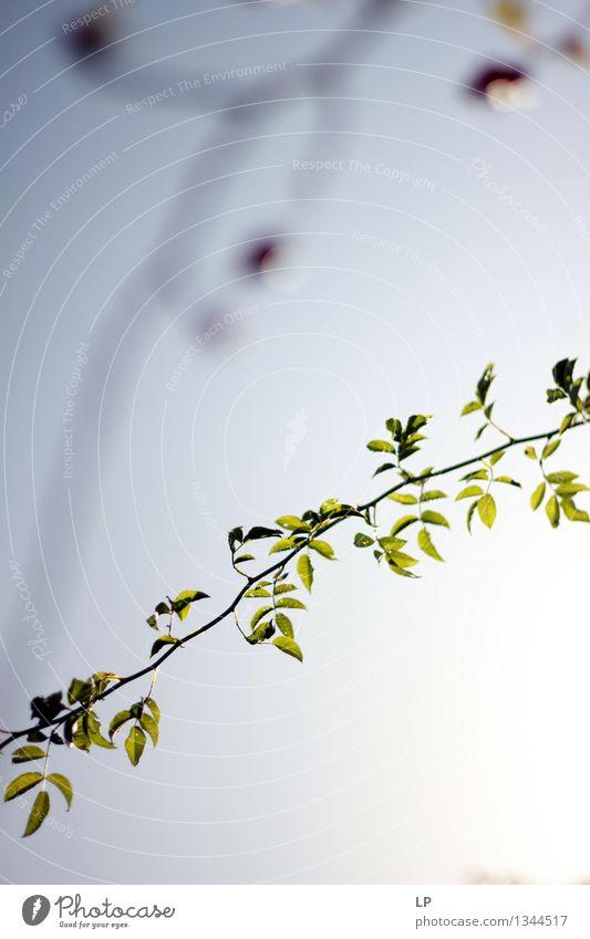 hip Baum Zweig Umwelt Natur Pflanze Urelemente Luft Himmel Wolkenloser Himmel Sonnenaufgang Sonnenuntergang Sonnenlicht Frühling Sommer Herbst Klima