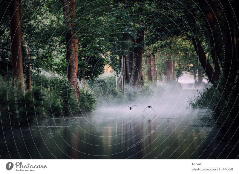 Enten im Flug Natur Pflanze Sommer Baum Tier Wald Gras Freiheit fliegen frei Nebel elegant Idylle Sträucher Schönes Wetter Fluss