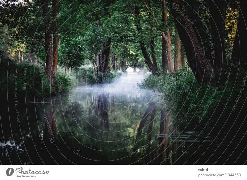 Spreewald Natur Landschaft Horizont Sommer Herbst Schönes Wetter Nebel Baum Gras Sträucher Wald Flussufer außergewöhnlich Einsamkeit einzigartig Idylle Ferne