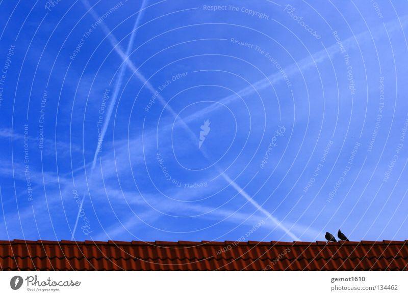 Himmelsstürmer Himmel blau weiß rot Ferne Linie Zusammensein Tierpaar Flugzeug paarweise Zukunft Streifen Dach Sehnsucht Frieden Backstein