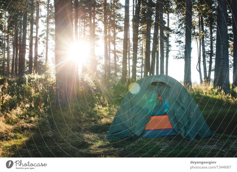 Zelt im Wald am Sonnenlicht. schön Erholung Freizeit & Hobby Ferien & Urlaub & Reisen Tourismus Ausflug Abenteuer Camping Sommer wandern Natur Landschaft Baum