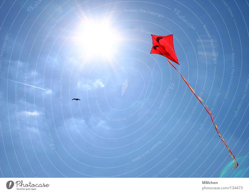 Konkurrenten Drache Schnur festhalten befestigen steigen Schweben schwindelfrei hoch Luft rot Vogel Flugzeug Licht grell Sonne Freizeit & Hobby Blick Neugier