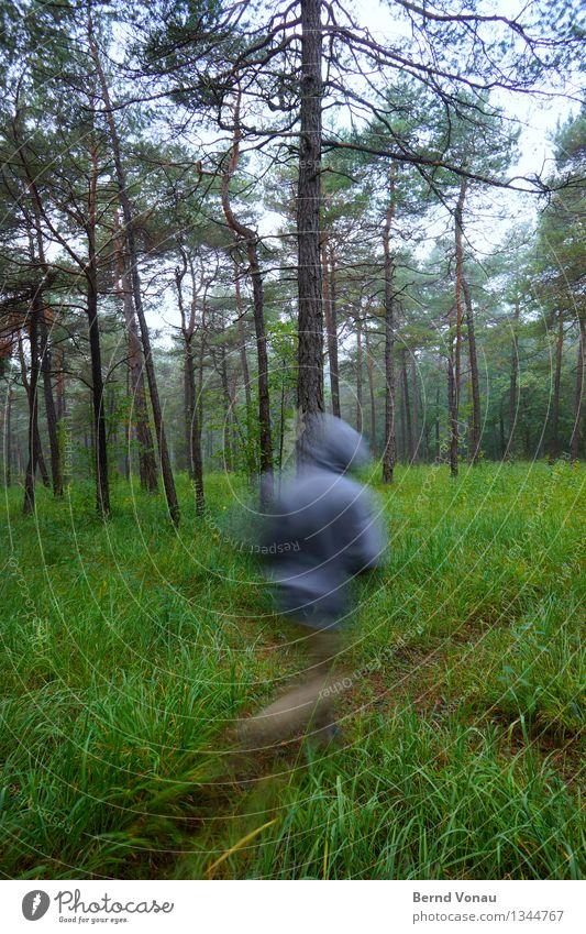 fluchtartig Sport Fitness Sport-Training Joggen Mensch 1 45-60 Jahre Erwachsene Umwelt Natur Landschaft Pflanze Baum Gras Wald schön Kiefernnadeln rennen Kapuze