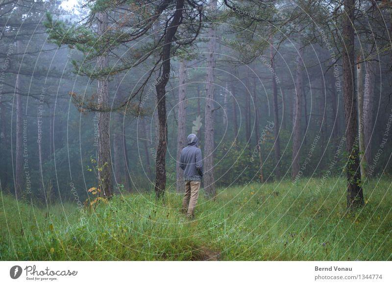 specht? Mensch maskulin 1 45-60 Jahre Erwachsene Umwelt Natur Landschaft Pflanze Baum Gras Wald Gefühle Stimmung Einsamkeit Spaziergang Nebel Nebelschleier