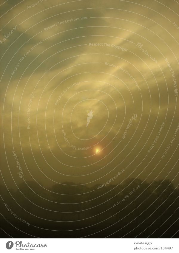 FOGGY MORNING Nebel grau trist Sonnenaufgang Sonnenblende Gegenlicht Licht Wolken Baum Schleier Smog Silhouette sichtbar unsichtbar Nebelschleier trüb