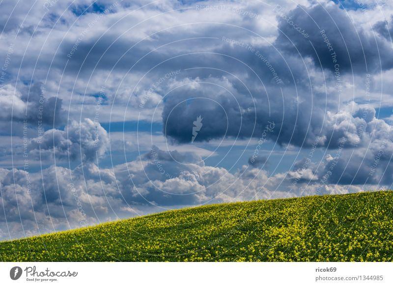 Rapsfeld Landwirtschaft Forstwirtschaft Natur Landschaft Wolken Frühling Feld blau Idylle ruhig Ausblick Aussicht Thüringen Thüringer Wald Deutschland Himmel