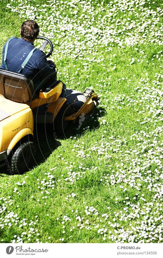 Gänseblümchenhasser Vorgarten Hinterhof Wiese Blumenwiese Rasenmäher Mann grün weiß gelb Licht Park Handwerk Garten Hausmeisterdienst Hausmeisterservice