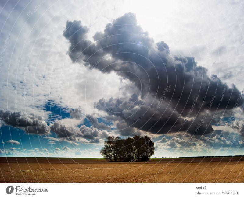 Wäldchen Umwelt Natur Landschaft Pflanze Himmel Wolken Horizont Klima Wetter Schönes Wetter Baum Feld Idylle Ferne Zusammenhalt Erde Boden Landwirtschaft