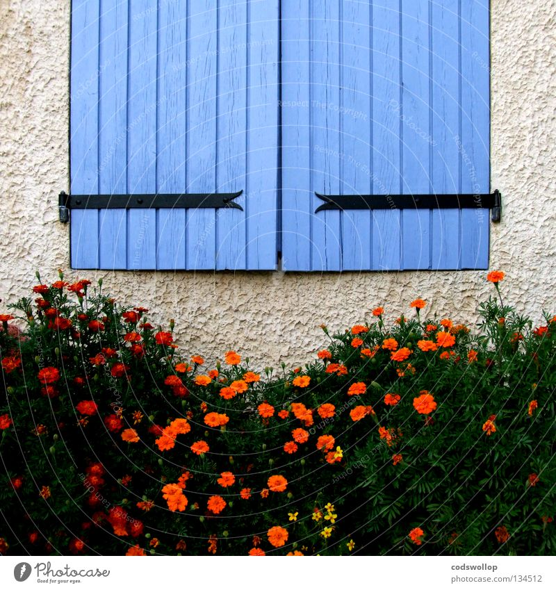les volets bleus Fensterladen Provence Frankreich Scharnier Detailaufnahme Haushalt hinge orange oeillet window flowers shutters carnation france blue blau