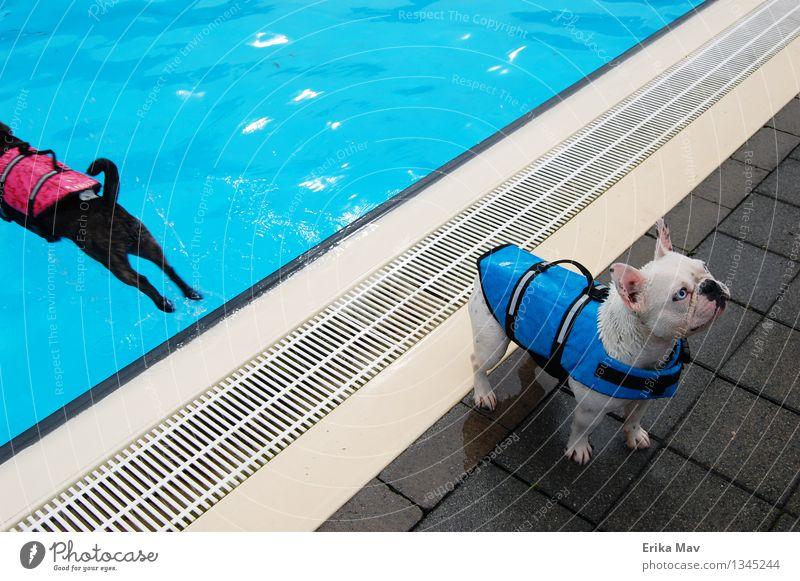 Schwimmwestentesten. Hund weiß Erholung Freude Tier kalt Sport Spielen klein Schwimmen & Baden Zusammensein rosa frisch Fröhlichkeit verrückt warten