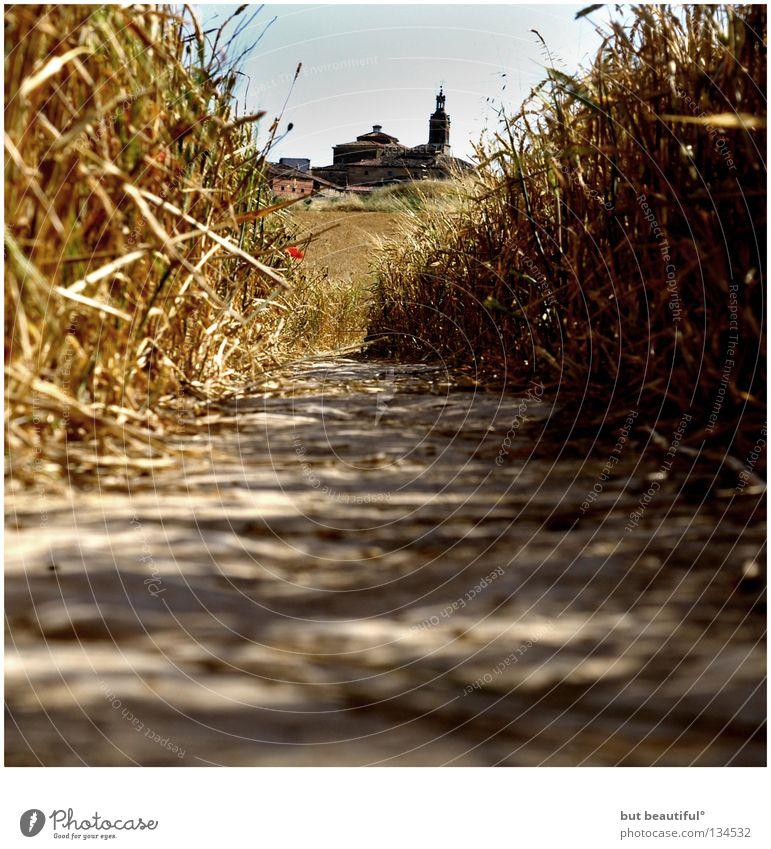 torres del rio° Sommer Wärme Feld Perspektive Wege & Pfade Physik Spanien Fußweg Kornfeld Navarra
