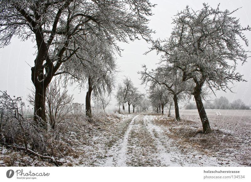 Franken - 02 Winter kalt Feld trüb ruhig Außenaufnahme Weitwinkel Baum Obstbaum Fußweg Frieden braun Zentralperspektive Fränkische Schweiz Schnee Raureif