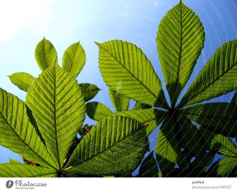 Exzessiver Frühling V Blatt Sommer Baum grün Freizeit & Hobby Ferien & Urlaub & Reisen träumen intensiv schön himmlisch Physik Karibisches Meer Himmel Sonne