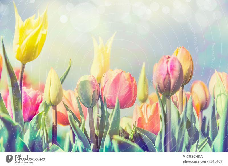 Tulpen Blumen im Park oder Garten Design Feste & Feiern Natur Pflanze Sonnenlicht Frühling Schönes Wetter Blühend gelb Frühlingsgefühle Frühlingsblume