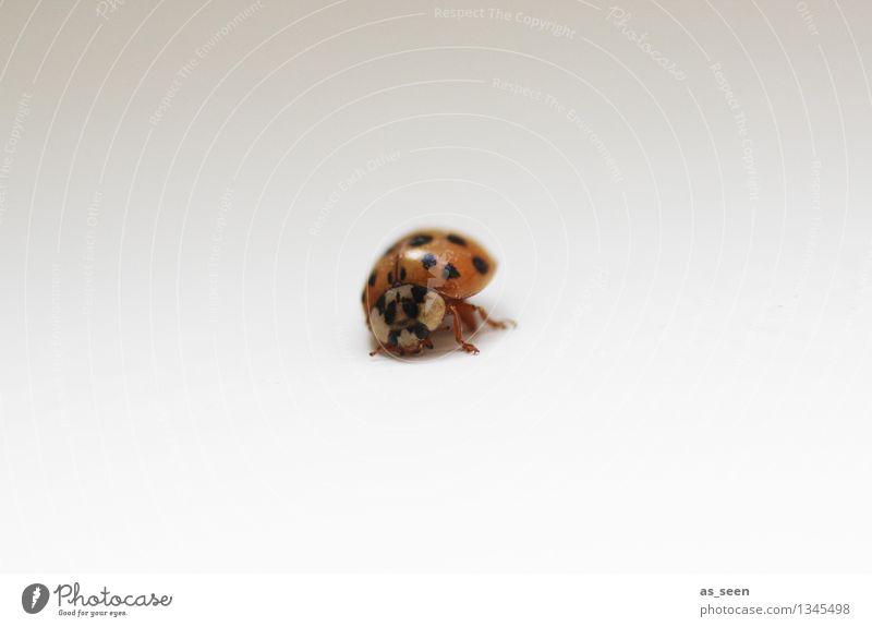 Kleiner Käfer Natur weiß rot Einsamkeit Tier schwarz Umwelt Gefühle Bewegung natürlich klein hell authentisch einfach niedlich Warmherzigkeit