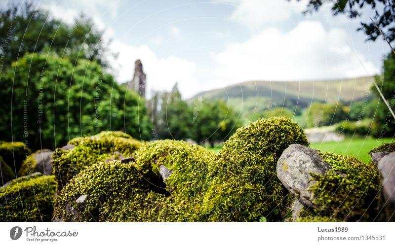 Moos Umwelt Natur Landschaft Schönes Wetter Pflanze Gras Wiese Stein Ruine Architektur Rest Mauer Wand grün verwachsen bewachsen historisch alt Farbfoto