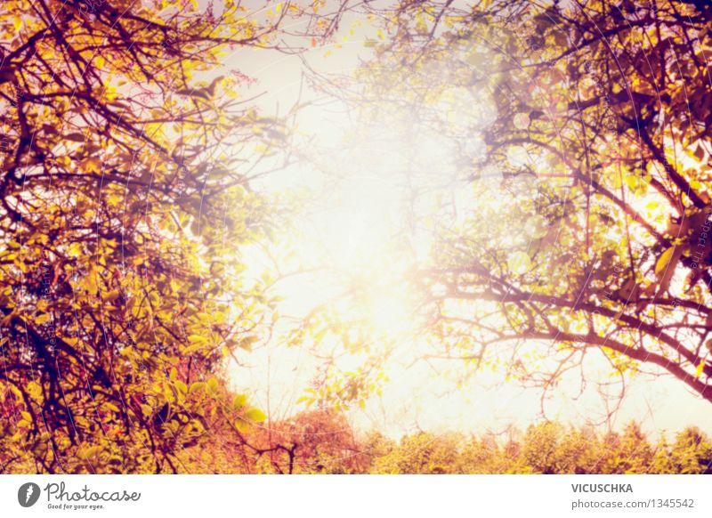 Herbst Sonne durch die Blätter, unscharf Natur Pflanze Baum Blatt gelb Herbst Hintergrundbild Garten Park Design Ast Schönes Wetter Herbstlaub herbstlich Herbstfärbung Zweige u. Äste