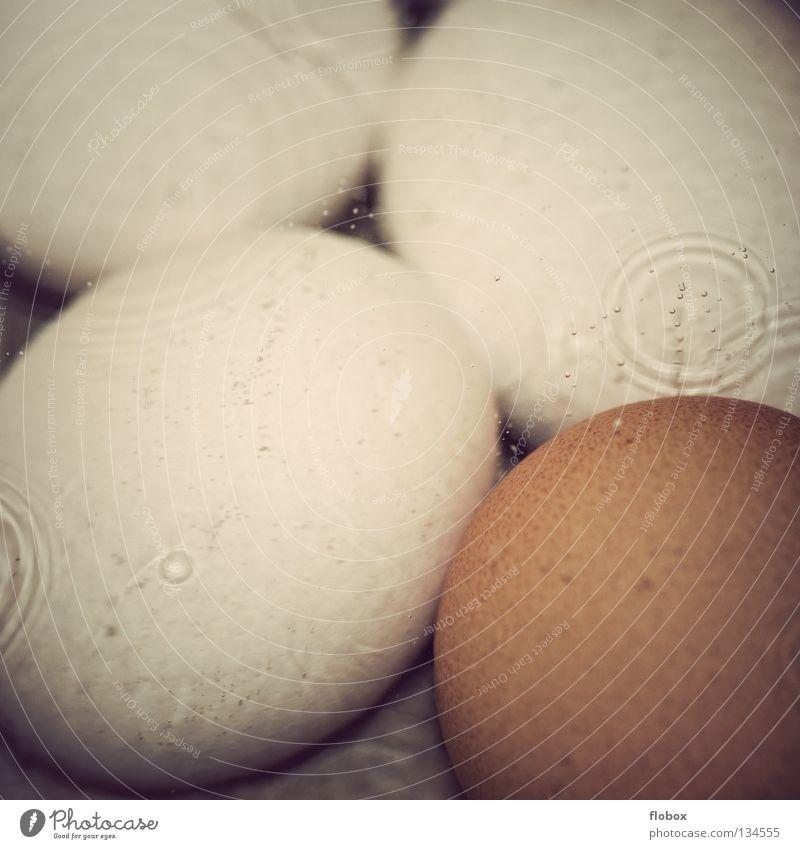 Blubber Bläschen.. II Wasser weiß braun Dekoration & Verzierung Küche Kochen & Garen & Backen streichen Ostern heiß Blase blasen Ei Oberfläche Verschiedenheit