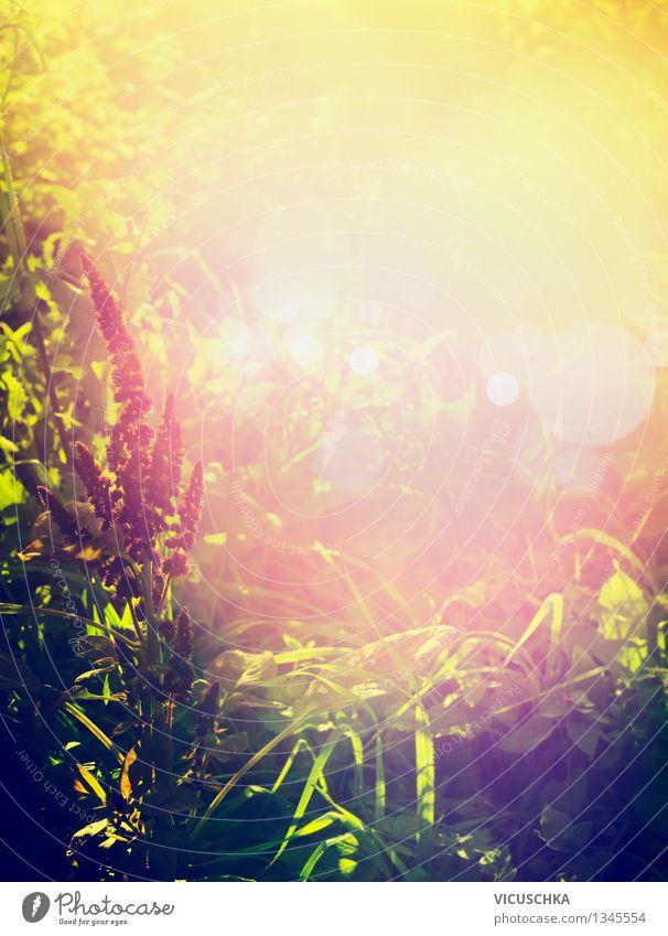 Schönes Sonnenlicht auf Naturhntergrund Pflanze Sommer Blume Landschaft Wald gelb Herbst Wiese Gras Stil Hintergrundbild Garten Park Design