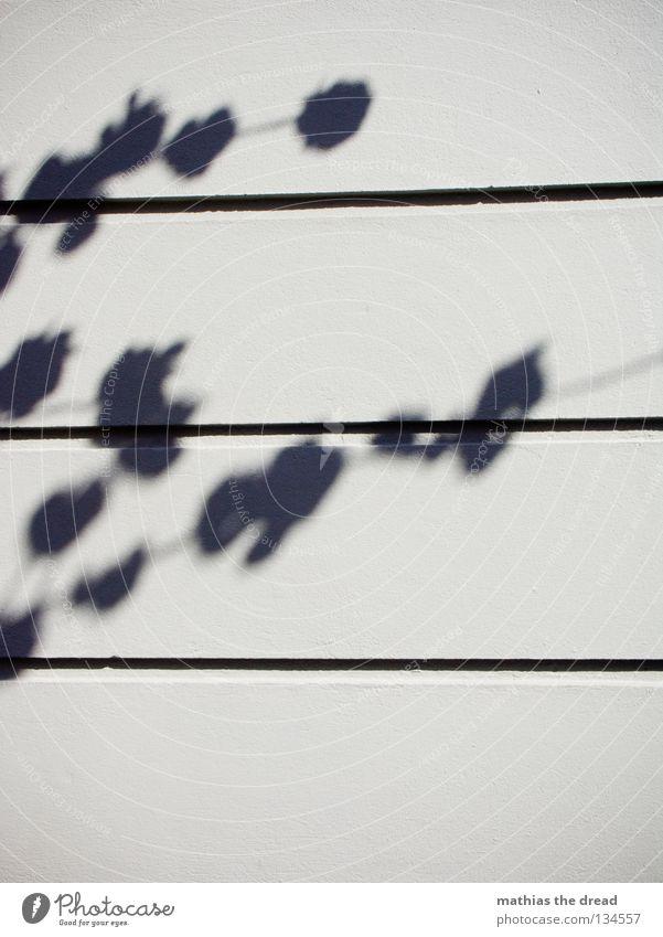 KIRSCHBLÜTEN Silhouette Baum Pflanze Blatt Blüte Unschärfe Wand Putz Haus Oberfläche parallel minimalistisch träumen schön Sonnenlicht Sommer Schatten Zweig Ast