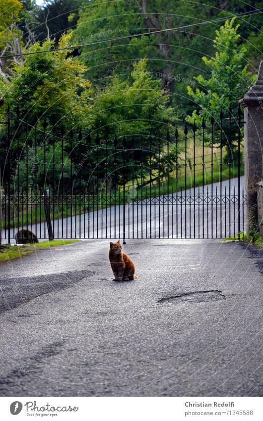 Miao Landschaft Garten Park Ruine Platz Tor Gartentor Einfahrt Asphalt Tür Denkmal Tier Katze 1 sitzen Macht Trauer Farbfoto Außenaufnahme Textfreiraum unten