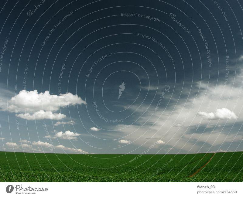 I love sunny sundays Augsburg Wolken Himmel grau Pol- Filter Gras Feld Horizont grün Altokumulus floccus Landwirtschaft leer Ferne Sonntag genießen Aussicht