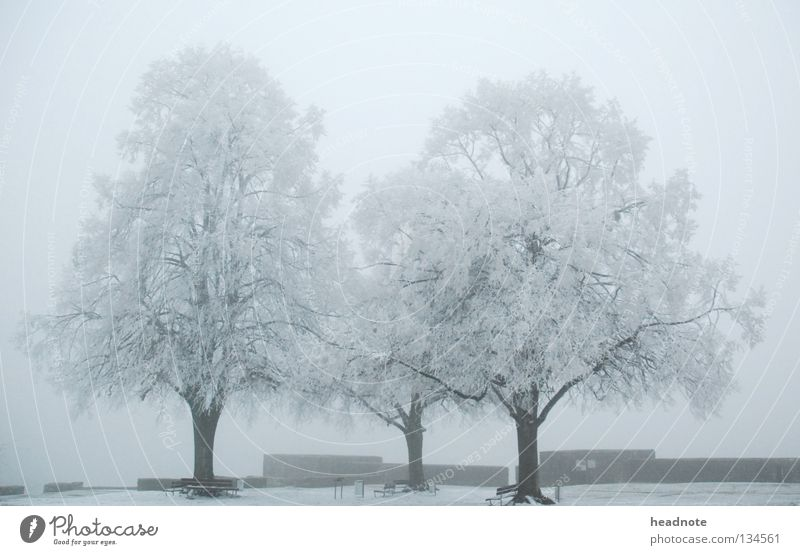three trees - winter is gone! weiß Baum Winter kalt Schnee Nebel Platz trist Frost Bank Ast Eimer