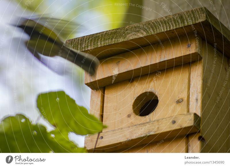 Der frühe Vogel.. Natur grün Sommer Tier Frühling Bewegung Garten fliegen Häusliches Leben Wildtier Geschwindigkeit Verantwortung Futterhäuschen Pünktlichkeit