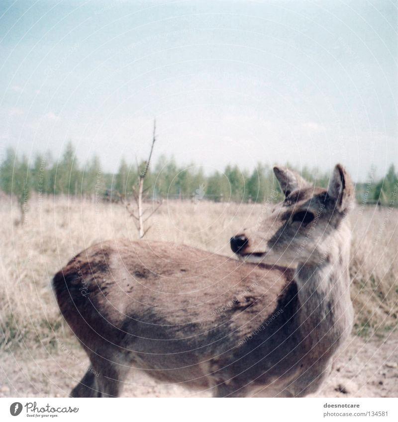 miezekatze. Natur Sommer Tier Vertrauen niedlich Leipzig Säugetier Hirsche Steppe Reh
