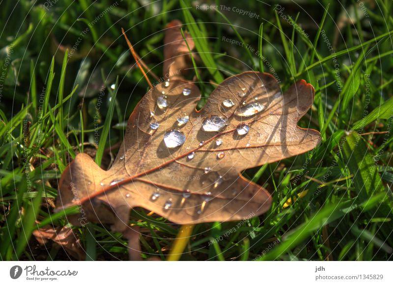 Tautropfen auf Laub Natur Pflanze grün Wasser Erholung Blatt ruhig kalt Umwelt Herbst Frühling Wiese Gras natürlich Garten braun