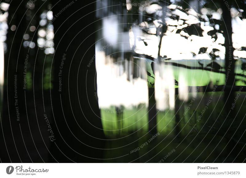 Wald mit Grünfläche Natur Ferien & Urlaub & Reisen Pflanze grün Baum Landschaft Blatt ruhig Stil außergewöhnlich Lifestyle Kunst Stimmung Park Design