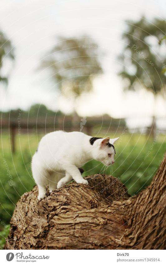 Noch ein Weltentdecker Katze Natur Baum Landschaft Tier Wald Wiese Gras Garten Häusliches Leben Feld Idylle frei beobachten Schönes Wetter Neugier