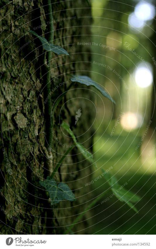 ein Stück Wald Natur Baum grün Pflanze springen Holz Frühling Lampe Wachstum trist Punkt Baumrinde Ranke Efeu Baumstamm