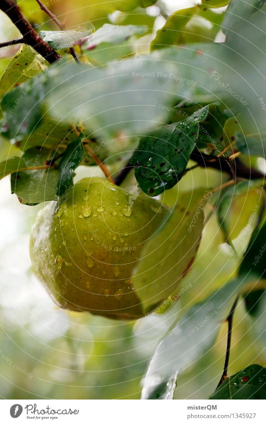 Fällt nicht weit... grün Gesundheit Kunst Frucht ästhetisch lecker Bioprodukte Apfel reif Kunstwerk Apfelbaum Apfel der Erkenntnis Apfelernte Apfelsaft