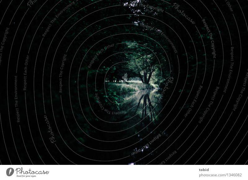 Spreedorado | Reflektionen Natur Landschaft Pflanze Wasser Schönes Wetter Baum Gras Sträucher Baumstamm Wiese Wald Flussufer Spreewald dunkel mystisch Farbfoto