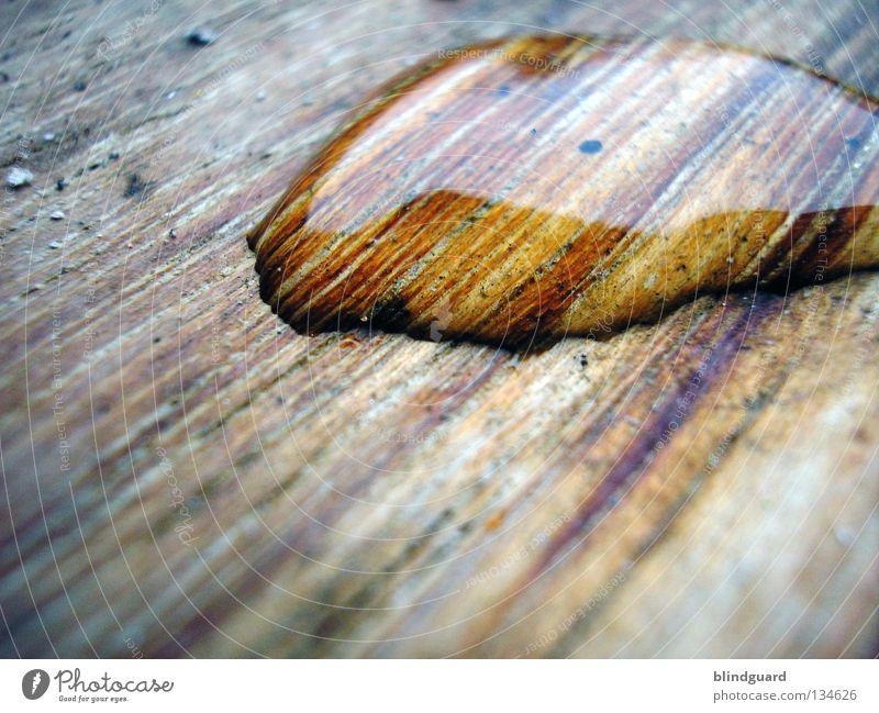 Drop On Wood Nahaufnahme glänzend nass feucht Unwetter rosa vergrößert Wasser schwarz dunkel Saurer Regen Umwelt klein groß Oberflächenspannung Holz Holzmehl